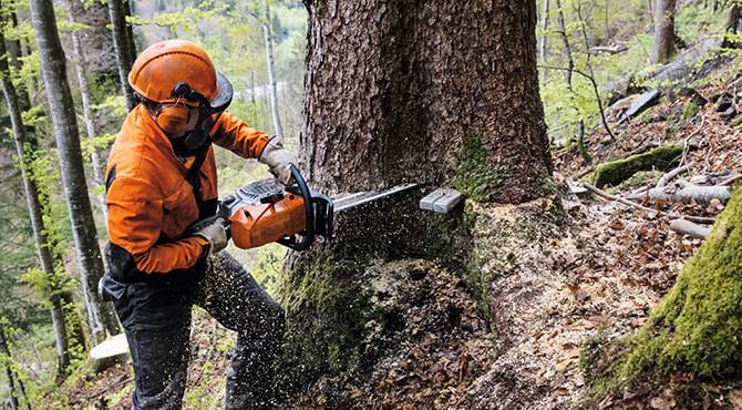 Benzin Motorsäge für die Forstwirtschaft